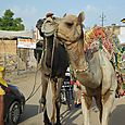 Rajasthan 551