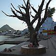 Rajasthan 564
