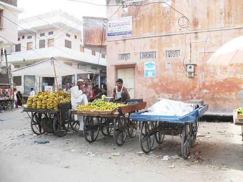 Rajasthan 453